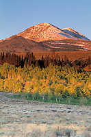 Fall colors on aspen trees and first snow on mountain in autumn, Dunderberg Peak, Eastern Sierra, Mono County, California.