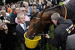 September 05, 2009: Sea The Stars gets a well deserved drink after winning The Tattersalls Millions Irish Champion Stakes. Leopardstown Racecourse, Dublin, Ireland.