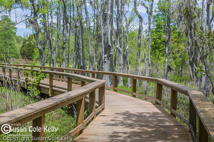 The Audubon Swamp Garden at Magnolia Plantation,  Charleston, SC