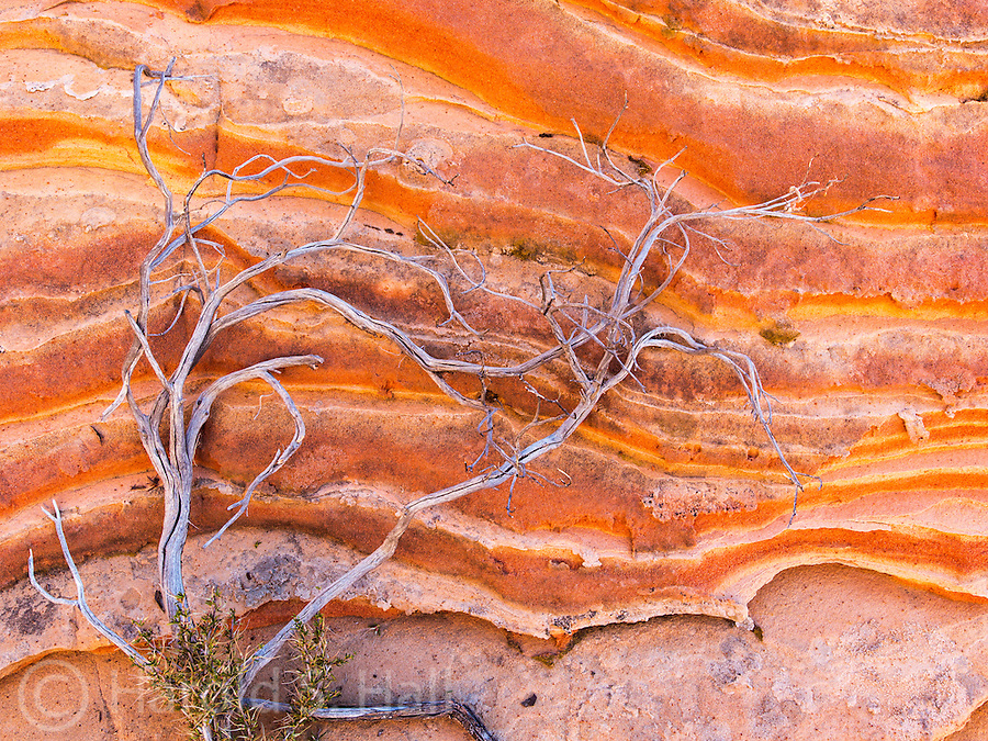 Branches of a struggling desert plant grow along the sandstone cliffs in the Vermillion National Monument area of Arizona.