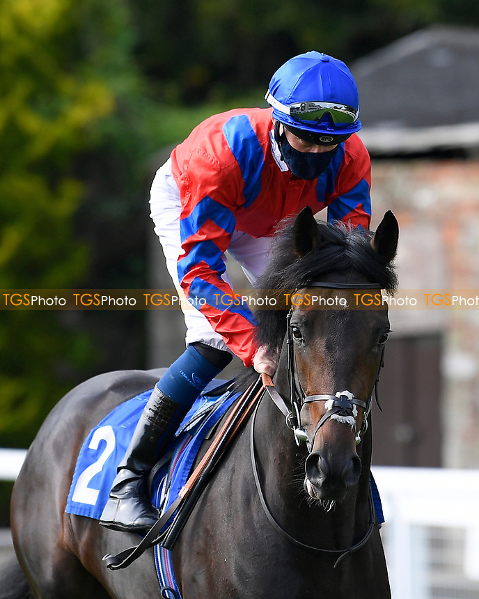 Freddy Flintshire ridden by Daniel Muscutt goes down to the start of The Radcliffe & Co Novice Median Auction Stakes (Div 2) during Horse Racing at Salisbury Racecourse on 11th September 2020