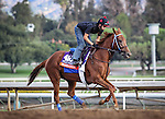 October 26, 2014: Parranda exercises in preparation for the Breeders' Cup Filly and Mare at Santa Anita Park in Arcadia, California on October 26, 2014. Zoe Metz/ESW/CSM