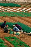 China, Bauern bei Chengde