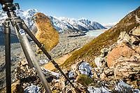 wildlife | New Zealand
