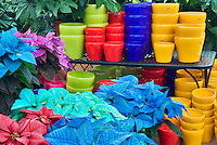 Colorful pots and colored pointsettias. Al's Garden Nursery. Sherwood, Oregon