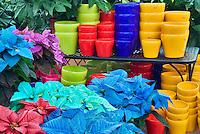 Colorful pots and colored pointsettias. Al's Garden Nursery. Sherwood, Oregon