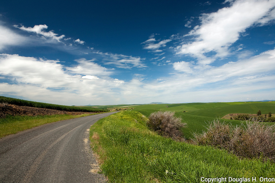As the Palouse country of Washington drops to the Snake River, many back roads produce peaceful views.  Steptoe Butte and Kamiak Butte in the distant background.
