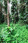 Lava Tree State Park, Hawaii