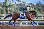 October 26, 2014: One Lucky Dane exercises in preparation for the Breeders' Cup Juvenile at Santa Anita Park in Arcadia, California on October 26, 2014. Zoe Metz/ESW/CSM