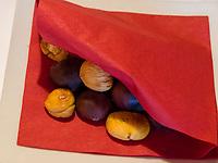 Kastanien, Törggelen bei Gasthaus Gstör, Algund bei Meran, Region Südtirol-Bozen, Italien, Europa<br /> roast chestnuts at wine tasting Törggelen, Restaurant Gstör, Lagundo near Merano, Region South Tyrol-Bolzano, Italy, Europe