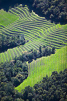 aerial photograph of a hillside vineyard in the Napa Valley, California