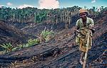 Betsimisaraka women planting manioc after slash and burn near Mantadia NP, Madagascar