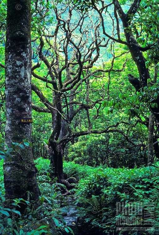 "Lush rainforest near pristine Wailau Valley, sign says """"malama"""" (take care of)"