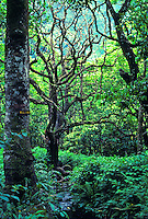 "Lush rainforest near pristine Wailau Valley, sign says """"malama"""" (take care of)"