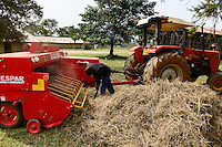 KENIA, County Kakamega, Bukura, ATDC Agricultural Technology Development Center, milk cow farm, fodder processing, hay bale machine/ Milchvieh, Futterzubereitung, Heu Ballenpresse
