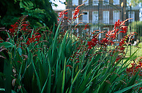 Wrought iron gates can be glimpsed through a flowerbed planted with a mass of vivid scarlet crocosmia