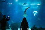 People visit the Oceanário de Lisboa aquarium
