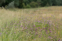 13.7.2021 Wind flower meadow <br /> ©Tim Scrivener Photographer 07850 303986<br />      ....Covering Agriculture In The UK....