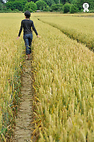Woman walking in a wheat field at summer (Licence this image exclusively with Getty: http://www.gettyimages.com/detail/85071248 )