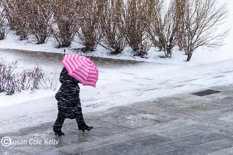 Pink Umbrella in a spring snowstorm