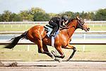 #40Fasig-Tipton Florida Sale,Under Tack Show. Palm Meadows Florida 03-23-2012 Arron Haggart/Eclipse Sportswire.