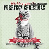 Sandra, CHRISTMAS ANIMALS, WEIHNACHTEN TIERE, NAVIDAD ANIMALES, paintings+++++,GBSSXM1A8X8,#xa#
