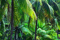 Palm trees, Montezuma, Costa Rica