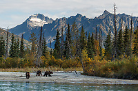 Fall landscape of grizzly bears walking on shore with Chigmit Mountains in background at Crescent Lake in Lake Clark National Park, Alaska<br /> <br /> Photo by Jeff Schultz/SchultzPhoto.com  (C) 2018  ALL RIGHTS RESERVED<br /> <br /> 2018 Bears, Glaciers and Fall Colors Photo tour/workshop
