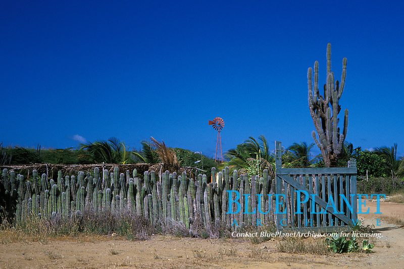ranch with windmill and cactus fence, Bonaire Netherland Antilles (Dutch ABC Islands) (Caribbean, Atlantic)