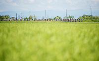 2013 Giro d'Italia.stage 13: Busseto - Cherasco..stretched peloton