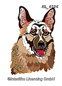Interlitho-Alfredo, REALISTIC ANIMALS, REALISTISCHE TIERE, ANIMALES REALISTICOS, paintings+++++,shepherd,KL4526,#a#, EVERYDAY ,dog,dogs