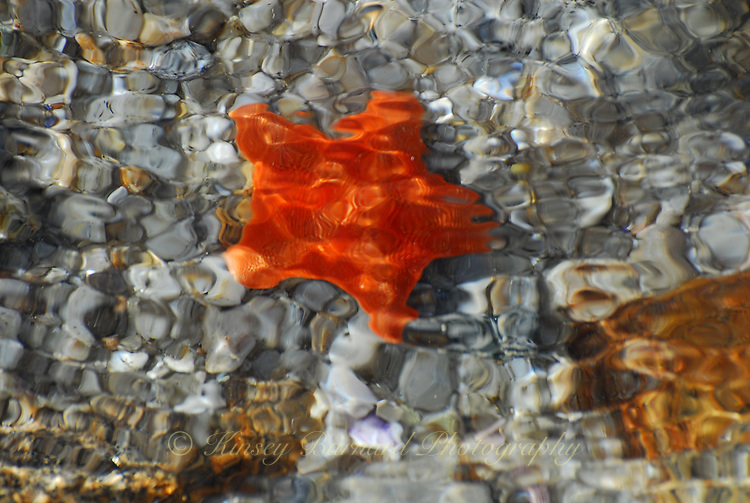 """STARFISH""<br />