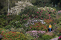 07/05/16 <br /> <br /> Becky Emery (23) strolls through the rhododendrons and azaleas which have burst into full bloom after a couple of days of sunshine, in Lea Gardens, near Matlock in the Derbyshire Peak District.<br /> <br /> All Rights Reserved: F Stop Press Ltd. +44(0)1335 418365   +44 (0)7765 242650 www.fstoppress.com