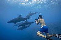 Snorkeler in the water with Indo-Pacific Ocean bottlenose dolphins (Tursiops aduncus) off of Chichijima in the Ogasawara Islands, Japan