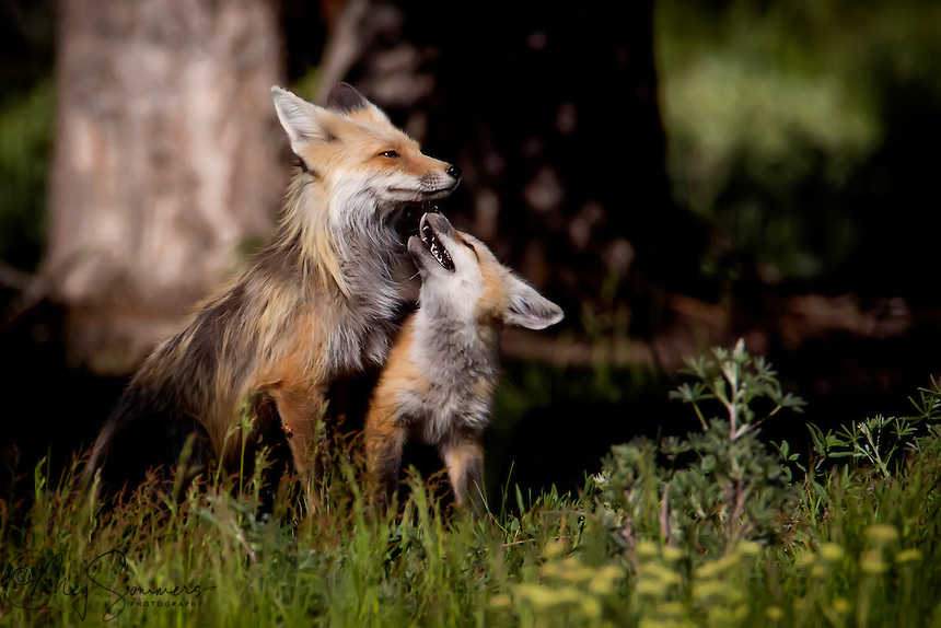 Vixen and kit sharing a quiet moment.