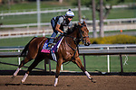 OCT 29 2014:Lady Eli, trained by Chad Brown, exercises in preparation for the Breeders' Cup Juvenile Fillies Turf at Santa Anita Race Course in Arcadia, California on October 29, 2014. Kazushi Ishida/ESW/CSM