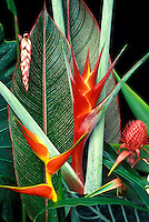Mix of tropical flowers including shell ginger, heliconia purpurea, bromeliad, and heliconia bihai with h. striata leaf