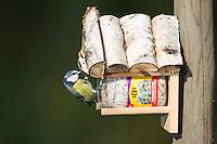 Blaumeise an der Vogelfütterung, Fettfutter, Blau-Meise, Meise, Cyanistes caeruleus, Parus caeruleus, blue tit. Ganzjahresfütterung, Vögel füttern im ganzen Jahr, Vogelfutter der Firma GEVO
