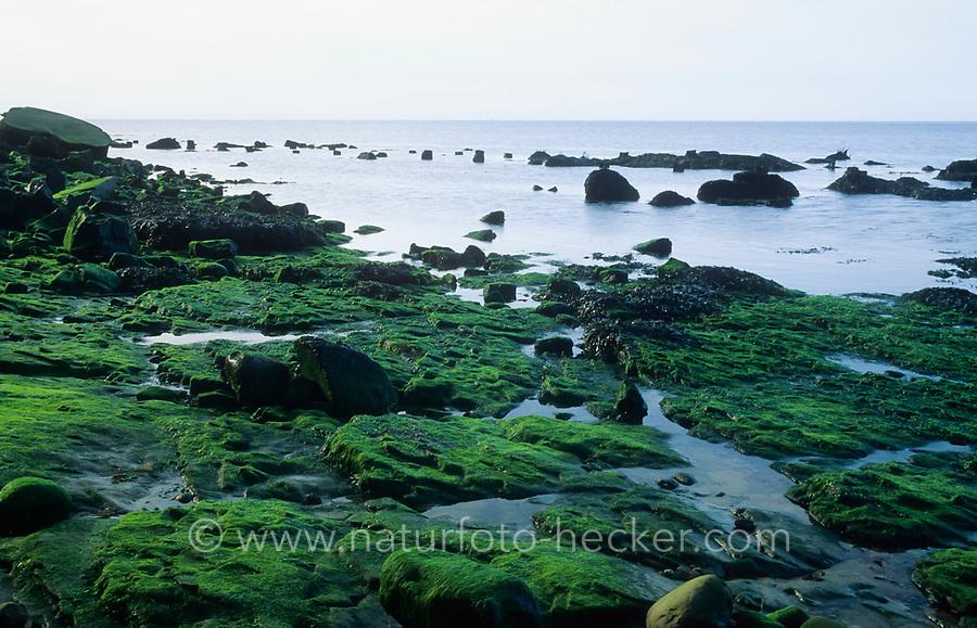 Helgoland, Nordsee, Felswatt am Fuß der Buntsandstein-Insel bei Niedrigwasser
