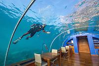 Maldives, Rangali Island. Conrad Hilton Resort. Ithaa underwater restaurant. Scuba diver cleaning restaurant windows. (MR)