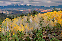 Ponderosa pine and aspen on Boulder Mountain<br />   and the Henry Mountains<br /> Dixie National Forest<br /> Colorado Plateau,  Utah