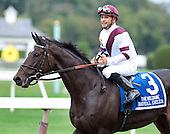 Hard to imagine seeing a horse that looks any more striking than Royal Delta.