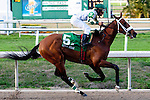 Feb 2011: Mucho Macho Man and Rajiv Miragh (5) wins the Risen Star Stakes at the Fairgrounds in New Orleans, Louisiana.