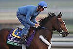 Strike The Moon, trained by Michael Trombetta, exercises in preparation for the upcoming Breeders Cup at Santa Anita Park on October 31, 2012.
