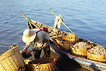 Woman sorting shrimps into baskets loaded in a small rowing boat on the Sanke river foreshore at dawn, Kampot, Cambodia.