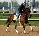 April 21, 2014 Medal Count, trained by Dale Romans, gallops at Churchill Downs with rider Faustino Aguilar.  He is owned by Spendthrift Farm and recently finished second in the Blue Grass Stakes.