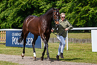 GBR-Zara Tindall presents Gladstone during the First Horse Inspection for the CCI-L2* Section D.  2019 GBR-Saracen Horse Feeds Houghton International Horse Trial. Wednesday 22 May. Copyright Photo: Libby Law Photography