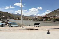 Dogs in the streets of the town of Zaduo, in the far interior of the Tibetan Plateau, in western China. Relocation communities been created to house nomadic herders moved from the highland grasslands. The nomads have been blamed for contributing to the deterioration of the grasslands, so have been moved, sometimes forcibly, into newly built towns that can be found across the plateau.