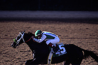 War Emblem races down the final stretch to win the Kentucky Derby.<br /> The horse was bought by a Saudi prince and trainer Bob Baffert led the race unchallenged to win.  The Kentucky bred horse was originally sold for $20,000 at a Keeneland sale.