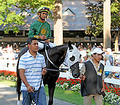 camille's appeal, adirondack stakes